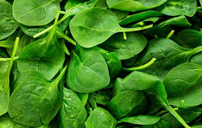 A Variety of Spinach is Healthy for Cholesterol Levels
