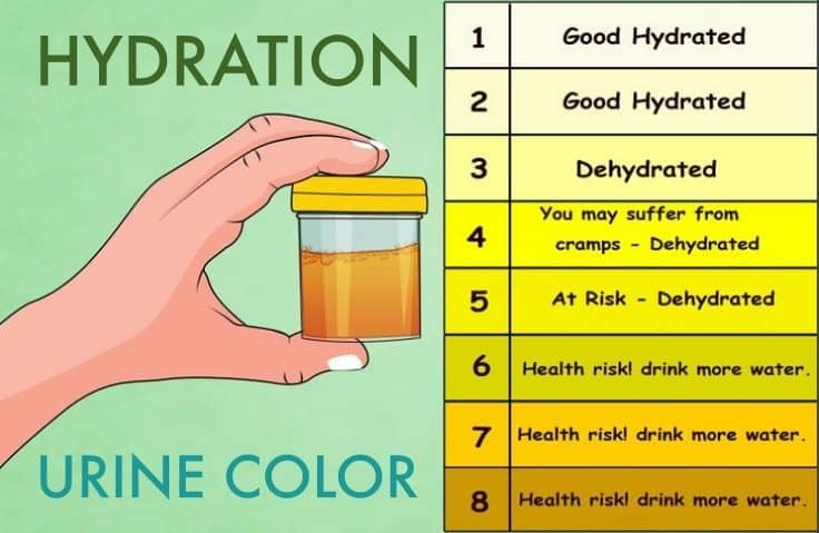 Your Urine Color Says a Lot About Hydration