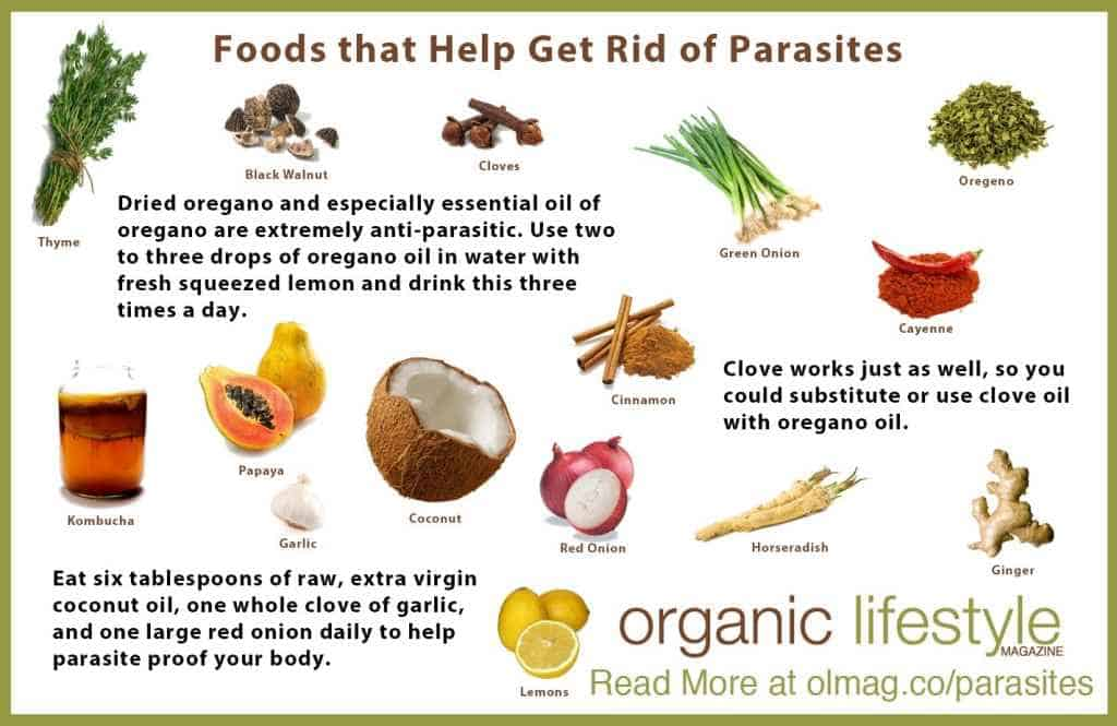 18 Signs There Are Parasites In Your Body